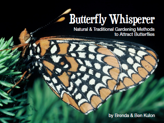 The Butterfly Whisperer Cover Photo
