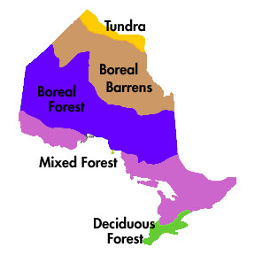 Carolinian Species & Habitats - Forests