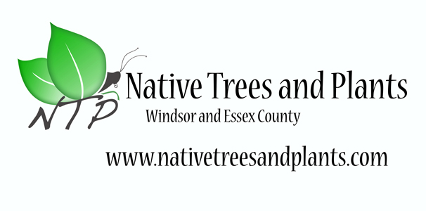 Native Trees and Plants