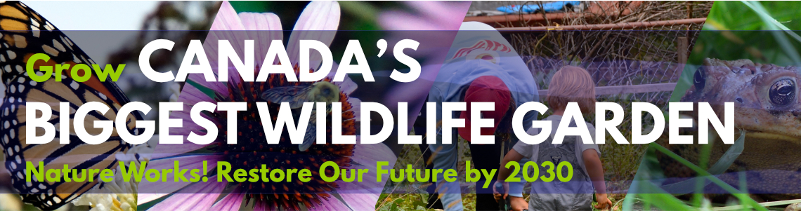 Grow Canada's Biggest Wildlife Garden - Nature Works! Restore our Future by 2030