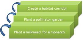 Figure 7: start by planting a milkweed for a monarch. Build on the previous step by panting a pollinator garden.  Finally, graduate to constructing an entire habitat corridor