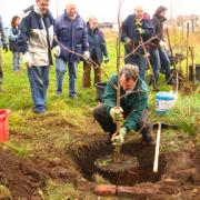 Picture of Alan planting a tree with onlookers