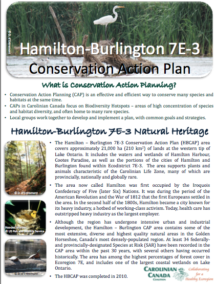 Hamilton Burlington CAP Fact Sheet