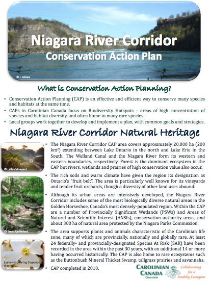 Niagara River CAP Fact Sheet