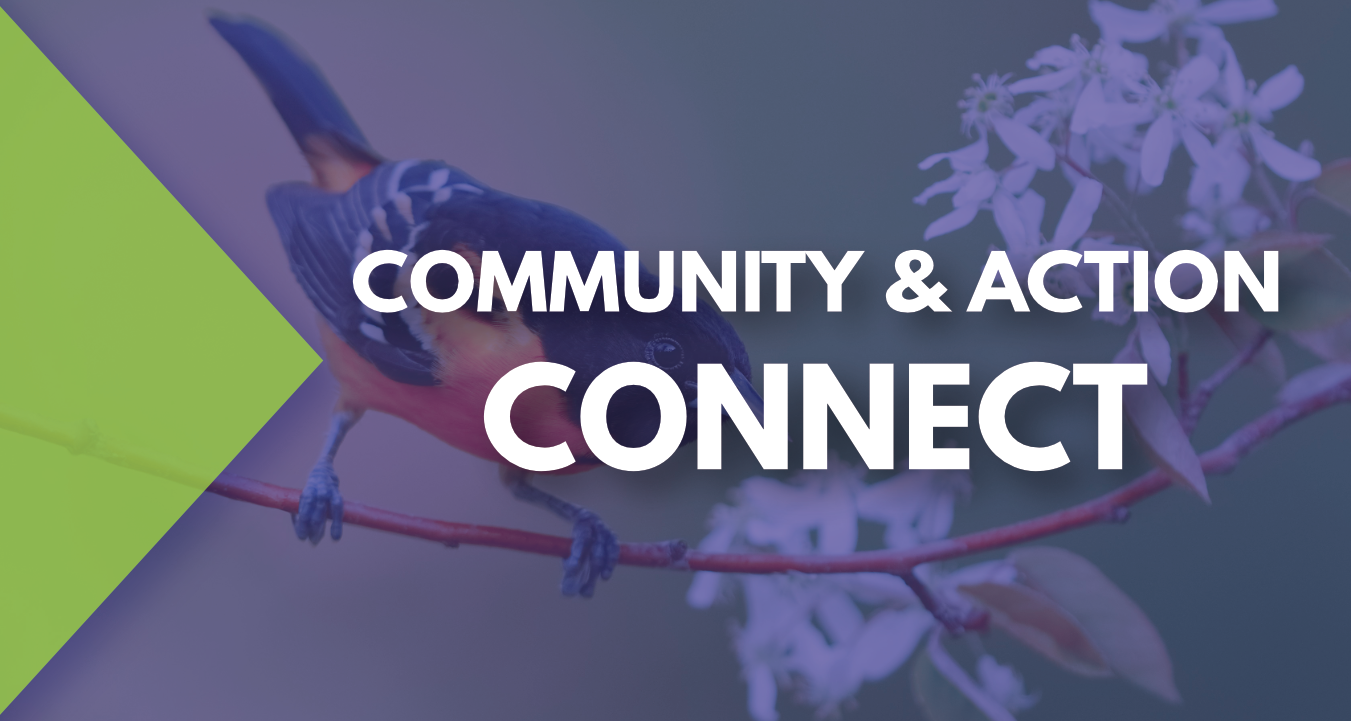 Community & Action - Connect
