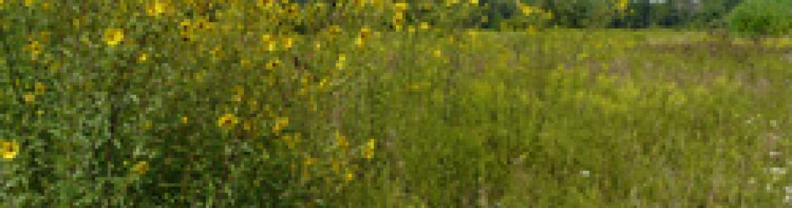 Link to Landowner Leaders Workshop: For Woodlot Owners - Delhi - 2013