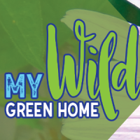 My Wild Green Home
