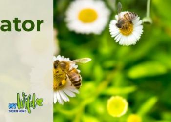 """A photo of wooden bee hotels and a photo of bees on flowers. Overlayed on these images is text that reads """"Creating Pollinator Pathways, June 30 7pm-8pm, Online Workshop"""""""