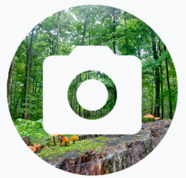 Camera image over a forest background.