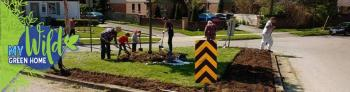 A group of adults and children are shoveling out grass from a median in the neighbourhood to plant a pollinator garden