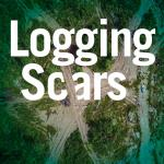 An aerial shot shows the extensive damage done by logging roads created in a Northern Ontario forest. There is a truck on the road for scale. Over the image is large text reading: Logging Scars.